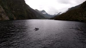 Liquid Sunshine und Delphine im Fjordland – Doubtful Sound [NZ]