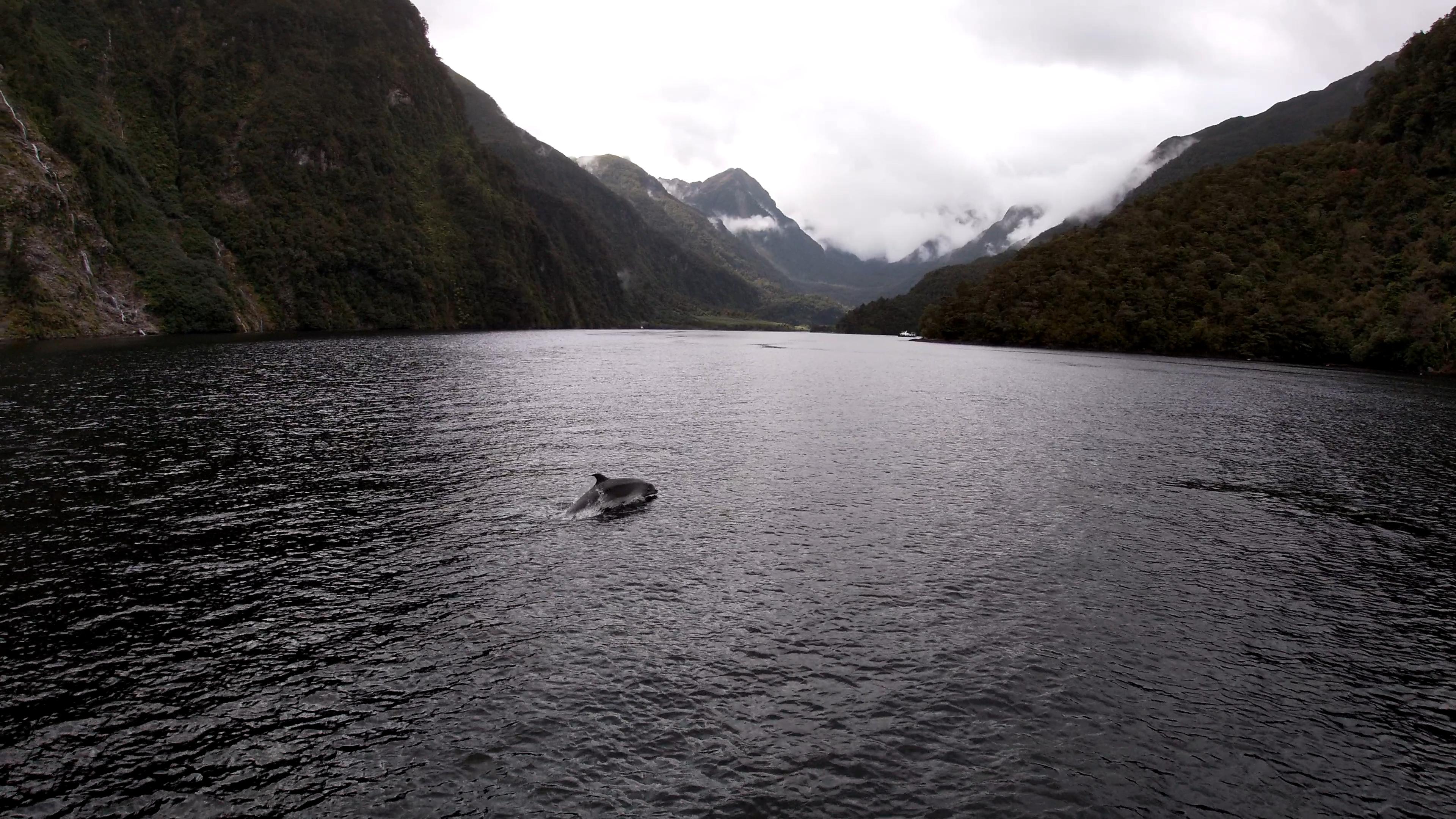 You are currently viewing Liquid Sunshine und Delphine im Fjordland – Doubtful Sound [NZ]