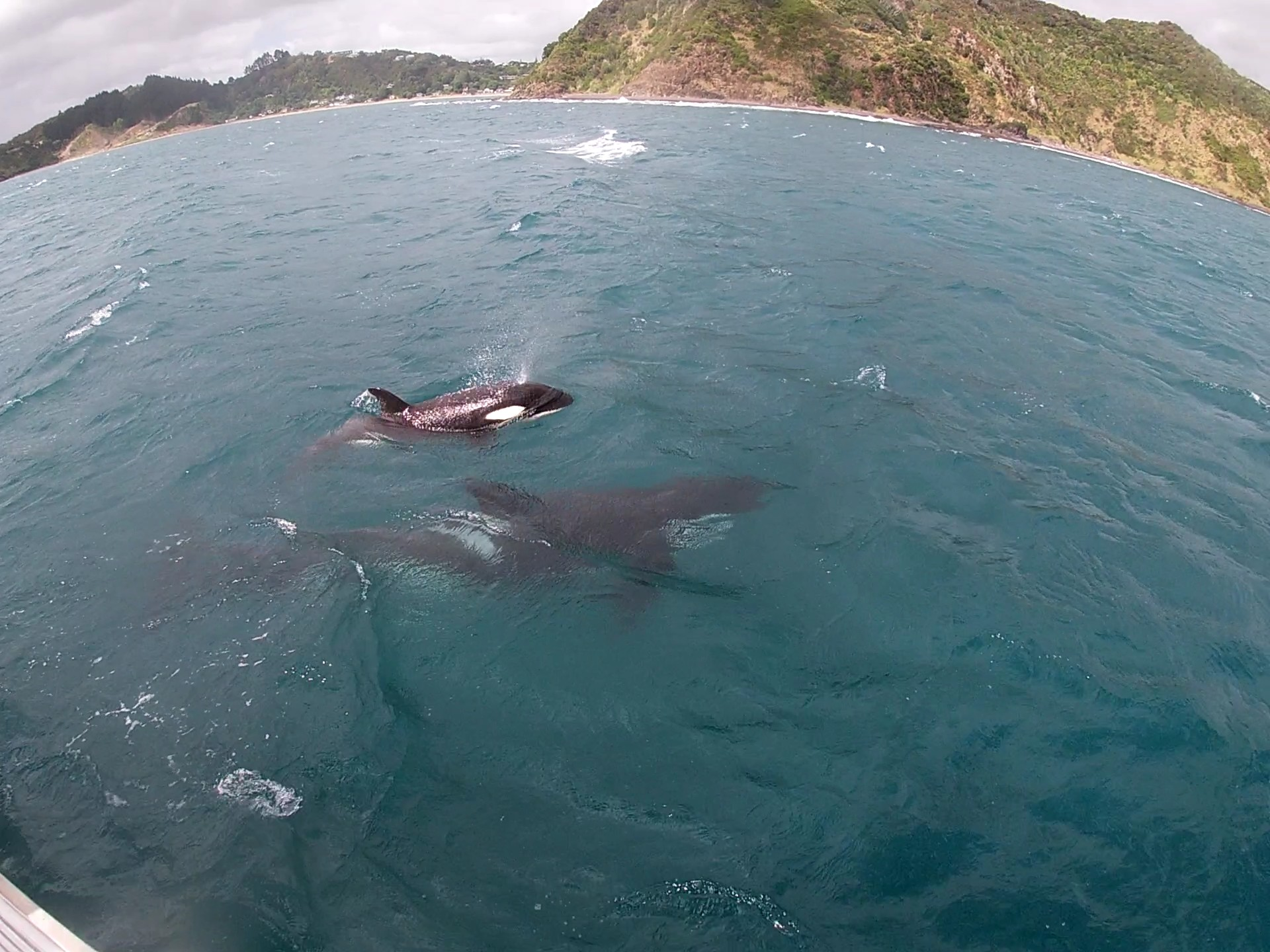 You are currently viewing Segeltrip mit Orcas in den Bay of Islands und der letzte Tag in Neuseeland [NZ]