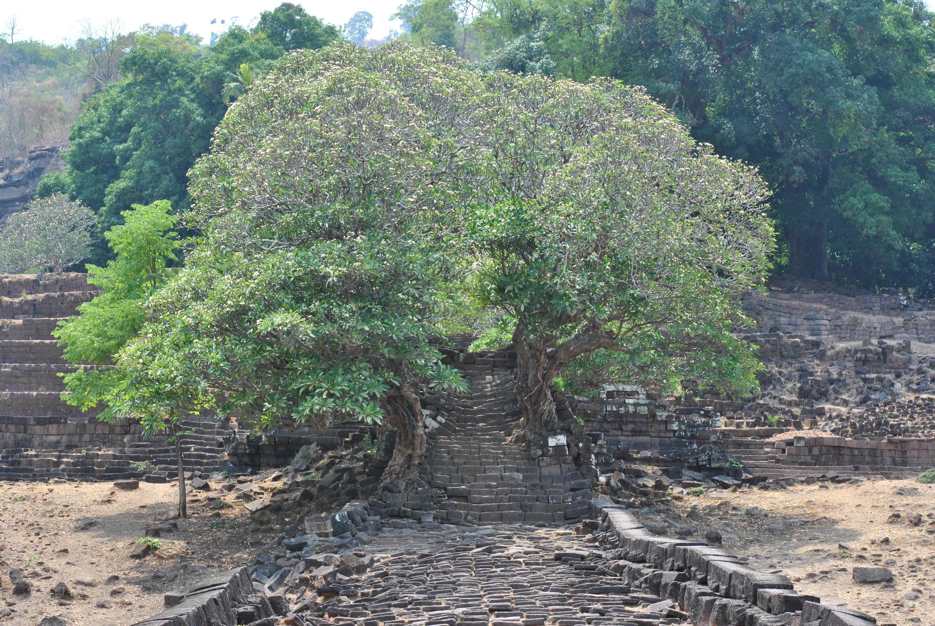 Pakse, Champasak und die Umgebung [LAOS]