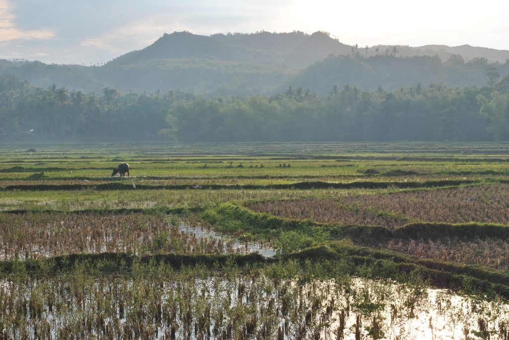 Read more about the article Auf ins nächste Abenteuer auf den Philippinen [PHL]