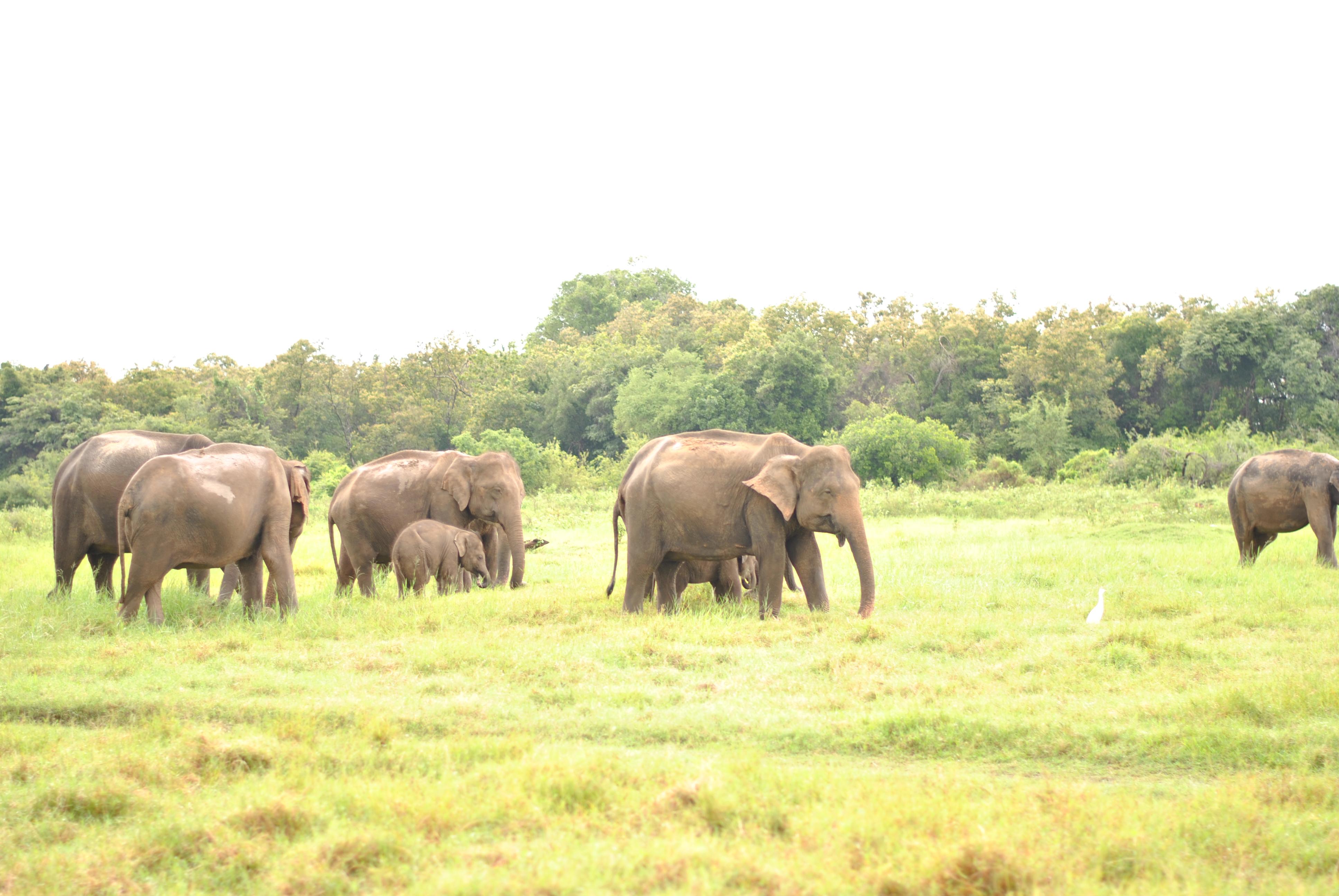 Der erste Stopp in Sri Lanka's Hochland – Sigiriya [LKA]